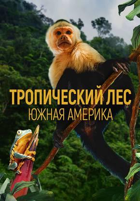 Тропический лес: Южная Америка смотреть фильм