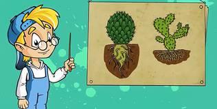 Профессор Почемушкин - Откуда кактусы берут воду в пустыне?